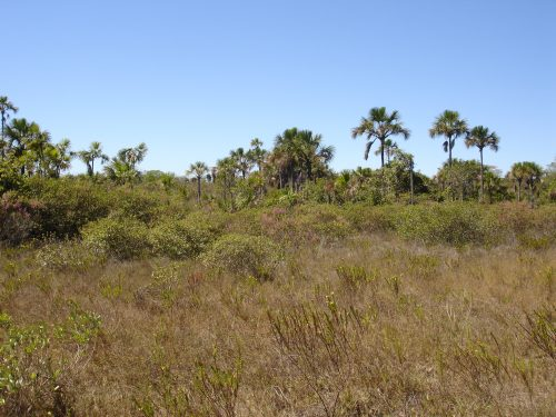 Florida Land